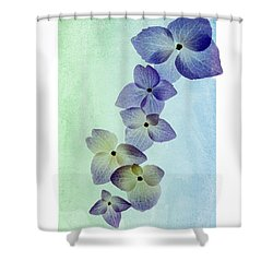Hydrengae Petals Shower Curtain by Rebecca Cozart