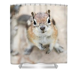 Hypno Squirrel Shower Curtain