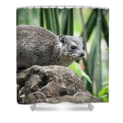 Hyrax Shower Curtain