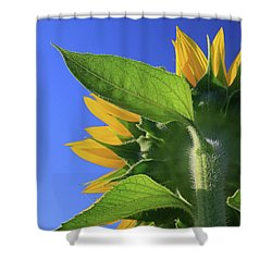 Shower Curtain featuring the photograph I Am Not Looking At You by Christopher McKenzie