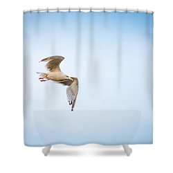 Shower Curtain featuring the photograph I Believe I Can Fly by Joel Witmeyer