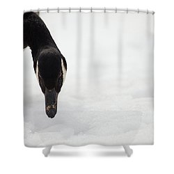 Shower Curtain featuring the photograph I Do See You by Karol Livote