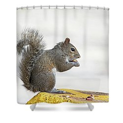 Shower Curtain featuring the photograph I Have My Nuts by Deborah Benoit