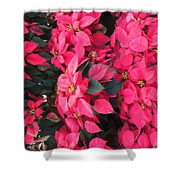 Shower Curtain featuring the photograph I Love Poinsettias by Kay Gilley