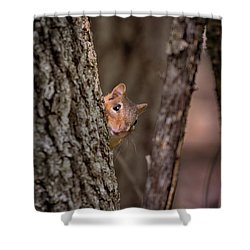 Shower Curtain featuring the photograph I See You by Susan Rissi Tregoning