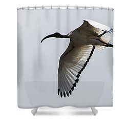 Ibis In Flight Shower Curtain by Pravine Chester