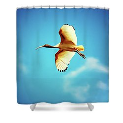 Ibis Of Light Shower Curtain