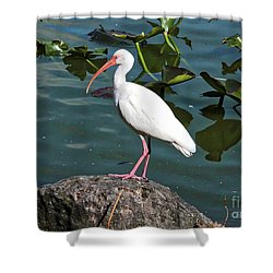 Ibis Rock Shower Curtain by Carol Groenen