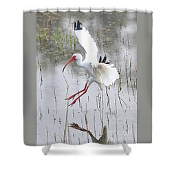 Ibis Soft Water Landing Shower Curtain by Carol Groenen