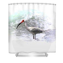 Ibis Surf Shower Curtain