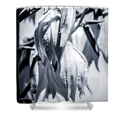 Shower Curtain featuring the photograph Ice Ball by Stwayne Keubrick