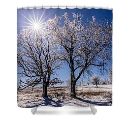 Ice Coated Trees Shower Curtain
