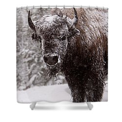 Ice Cold Winter Buffalo Shower Curtain