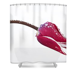 Ice Drops On Tulip Shower Curtain by James Steele