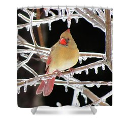 Ice Princess Shower Curtain by MTBobbins Photography