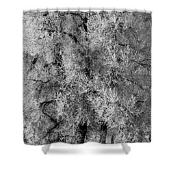Shower Curtain featuring the photograph Iced Cottonwoods by Colleen Coccia
