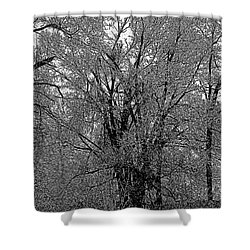 Iced Tree Shower Curtain