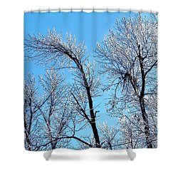 Iced Trees Shower Curtain