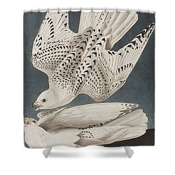 Iceland Falcon Or Jer Falcon Shower Curtain by John James Audubon