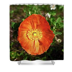 Iceland Poppy Shower Curtain by Sally Weigand
