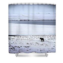 Icelandic Horse Shower Curtain