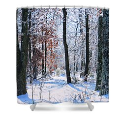 Icey Forest 1 Shower Curtain