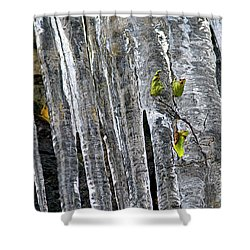 Shower Curtain featuring the photograph Icicles by Sharon Talson