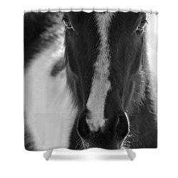 iContact Shower Curtain by Evelina Kremsdorf