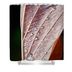 Icy Fall Morning Shower Curtain by Lisa Knechtel