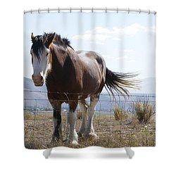 Idaho Work Horse 2 Shower Curtain by Cynthia Powell