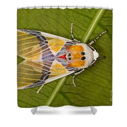 Idalus Carinosa Moth Shower Curtain by Gabor Pozsgai
