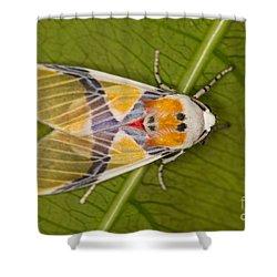 Idalus Carinosa Moth Shower Curtain