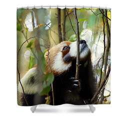 Shower Curtain featuring the photograph Idgie In A Tree by Lisa L Silva