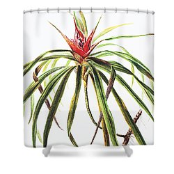 Ieie Plant Shower Curtain by Hawaiian Legacy Archive - Printscapes