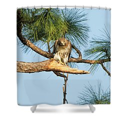 If Looks Could Kill - Hawk Shower Curtain