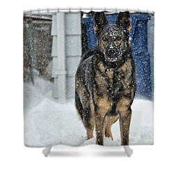 Shower Curtain featuring the photograph If You Dare by Nikki McInnes