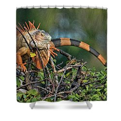 Iggy Shower Curtain by Don Durfee