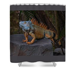 Shower Curtain featuring the photograph Iguana 2 by Jim Walls PhotoArtist