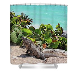 Iguana At Tulum Shower Curtain by Roupen  Baker