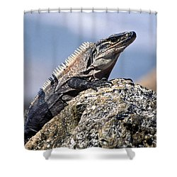 Shower Curtain featuring the photograph Iguana by Sally Weigand