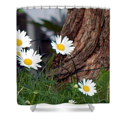 I'll Be Your Daisy Shower Curtain