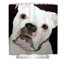 I'm A Bull Dog Shower Curtain