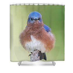 I May Be Fluffy But I'm No Powder Puff Shower Curtain by Bonnie Barry