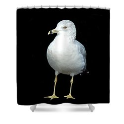 I'm Not As Gullible As I Look Shower Curtain