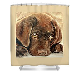 I'm Sorry - Chocolate Lab Puppy Shower Curtain