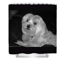 Shower Curtain featuring the digital art I'm The One For You by Kathy Tarochione