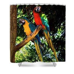 Image Of The Parrott Shower Curtain
