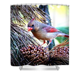 Img_0311 - Northern Cardinal Shower Curtain