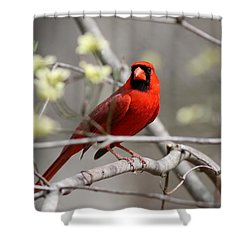 Img_2027-004 - Northern Cardinal Shower Curtain