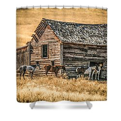 #2204 - Harrison Montana Shower Curtain